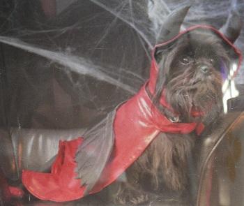 Halloween Spooctacular 1